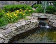 Koi pond upper pond with cascading water fronm filter area