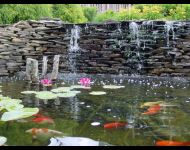 I Koi pond - fish - waterfall - flowers